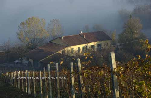 view of the house from the vineyards